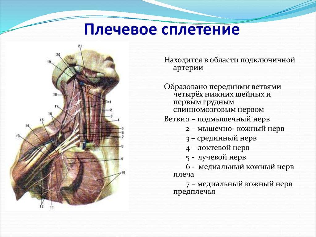 Сделать МРТ плечевого сплетения