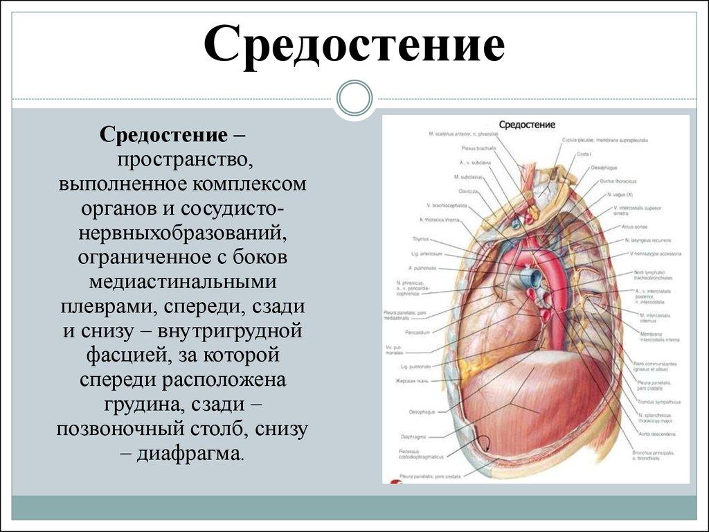 МРТ органов средостения